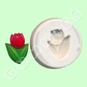 Tulipa peq